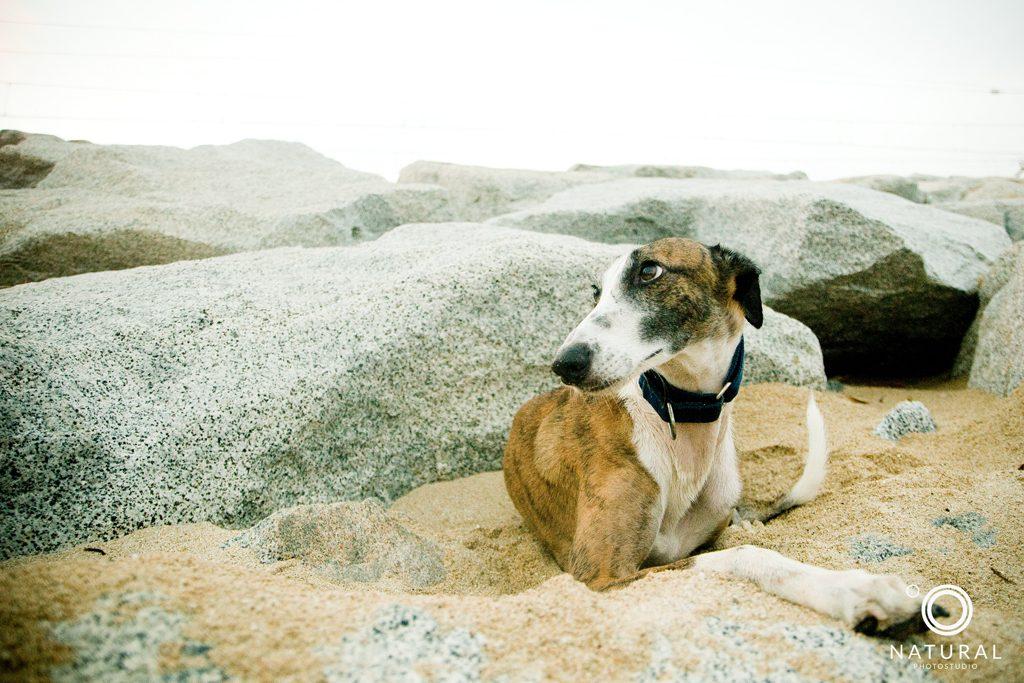 fotografia animales castelldefels